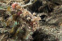 Marbled Shrimp<br /> <br /> Shot in Indonesia