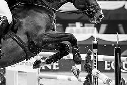 WULSCHNER Holger (GER), Diamant de Plaisir<br /> München - Munich Indoors 2019<br /> Equiline Youngster Cup 2019<br /> 1. Qualifikation für 7jährige Nachwuchspferde, <br /> Springprüfung nach Fehlern und Zeit, international<br /> Höhe: 1.35m<br /> 22. November 2019<br /> © www.sportfotos-lafrentz.de/Stefan Lafrentz
