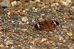 July 2007: Butterfly. Attractions near Chattanooga Tennessee. Point Park, National Park Service - Lookout Mountain, TN. (Photo by Alan Look)