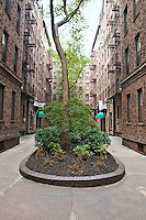 Courtyard at 83-15 116th Street