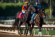 ARCADIA, CA - DECEMBER 30: Peace with Mike Smith before breaking his maiden at Santa Anita Park on December 30, 2017 in Arcadia, California. (Photo by Alex Evers/Eclipse Sportswire/Getty Images)