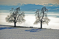 A wonderful view across the fog-covered Reuss valley to the distant alps in winter.