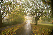 Picture by Mark Larner. Picture shows Valbyparken outside Copenhagen, Denmark. 27th October 2011