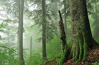 Carpathian Mountains, Romania
