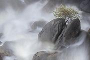 Rock, Tree and Waterfall, Yosemite National Park, California  2016