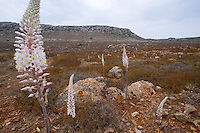Antikythera island, Mediterranean autumn vegetation, Greece