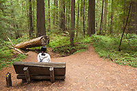 Woman Sitting on Bench at Founder's Grove, Humboldt Redwoods State Park, California
