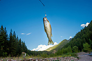 Cutthroat trout hanging from hook just after being caught on the Middle Fork of the Flathead River in the Great Bear Wilderness