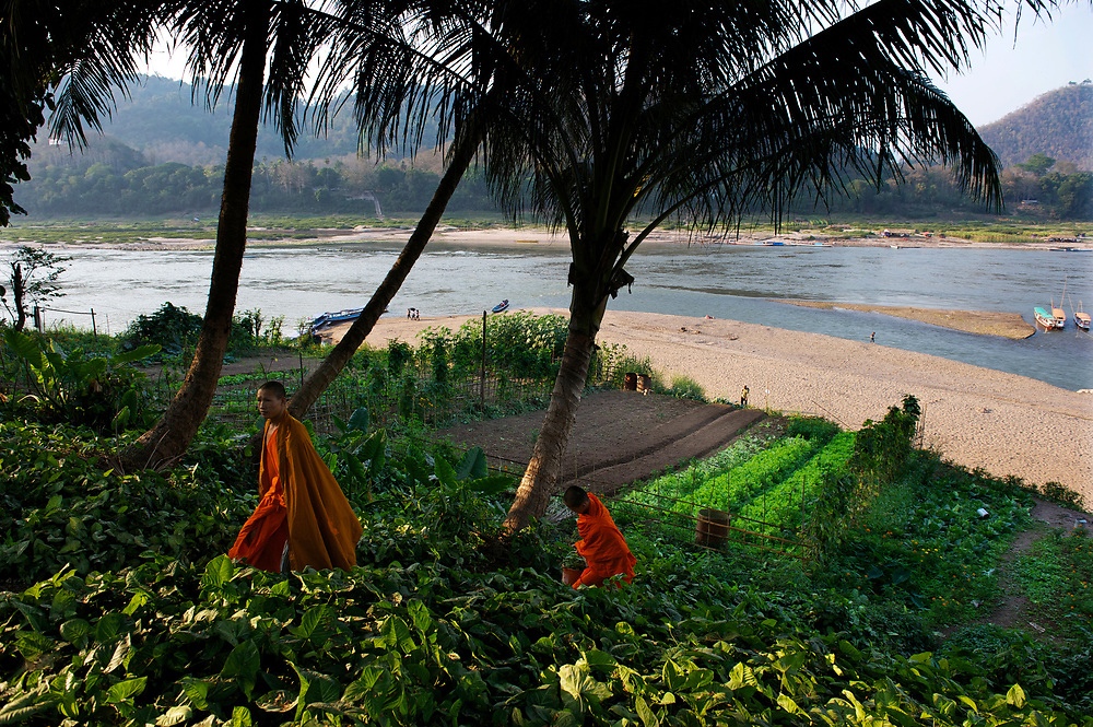 Buddhist novice monks attend to their monastery's vegetable garden along the banks of the Mekong River.