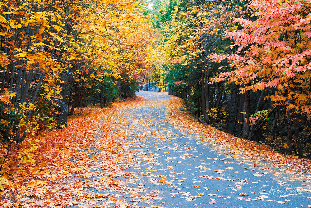 Fall color along the Mirror Lake road, Yosemite Valley, Yosemite National Park, California