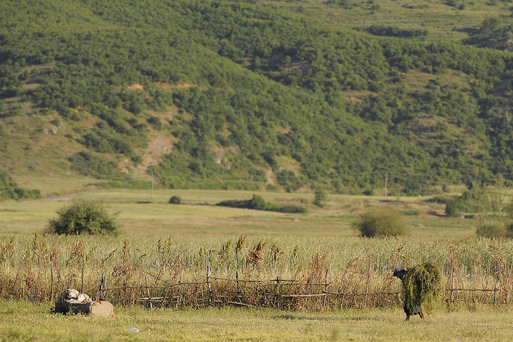 Heavy loaded. Lake Prespa National Park, Albania June 2009