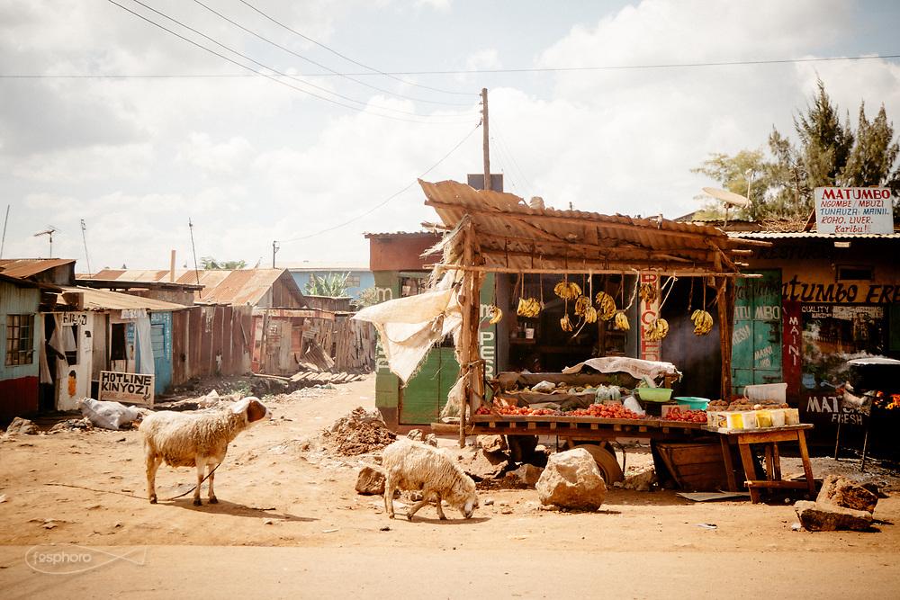 Kenia 2017: Nairobi, Capre, pecore e vacche, convivono con i passanti a kabiria Road