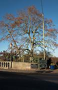 Henley, Oxfordshire. England General Views Henley Town  Berkshire side of Henley Bridge. Thursday  01/12/2016<br /> © Peter SPURRIER<br /> LEICA CAMERA AG  LEICA Q (Typ 116)  f1.7  1/4000sec  35mm  13.5MB