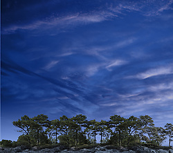 Pine trees with cloudy night sky