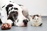 Great Dane saved kitten from going blind - 7 March 2018
