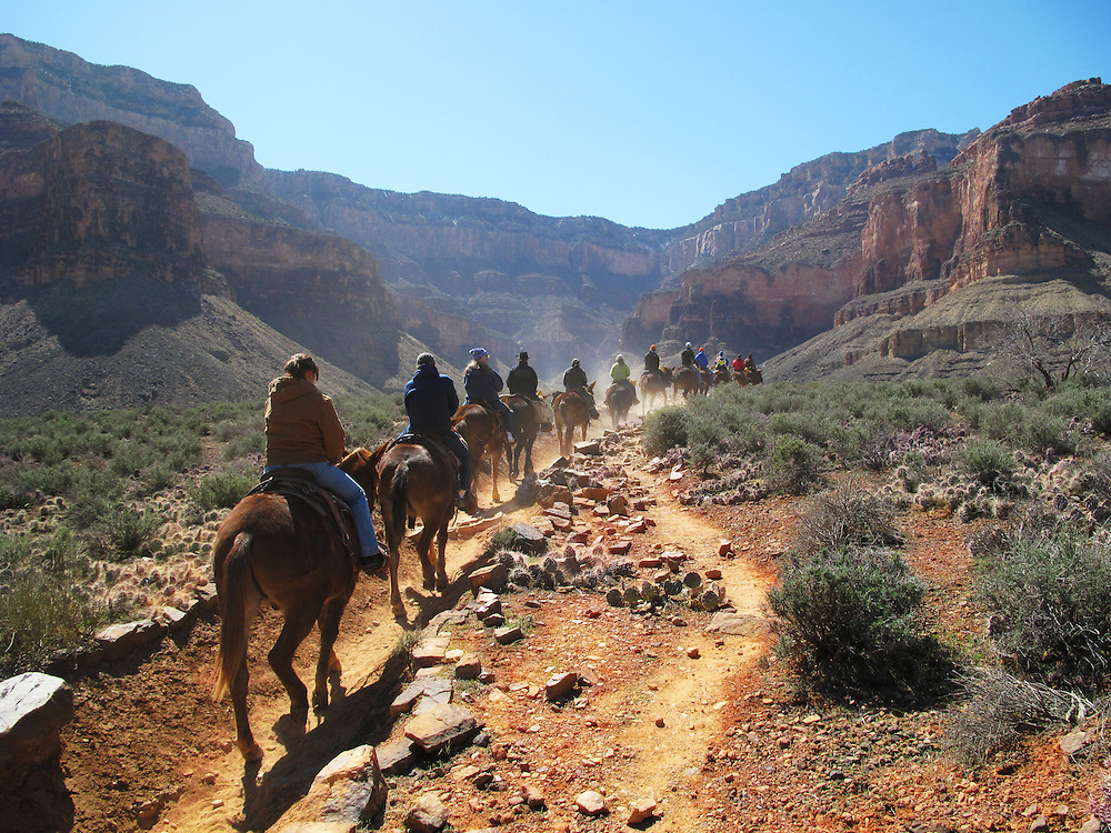 Mule riders coming back from Plateau Point. Grand Canyon National Park, Arizona.