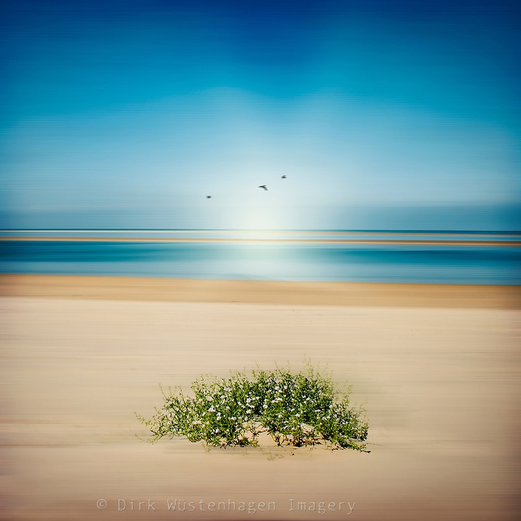 A bunch of tiny flowers on an abstract beach-scape.<br />