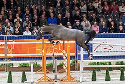 044, Montender<br /> KWPN hengstenkeuring - 's Hertogenbosch 2020<br /> © Hippo Foto - Dirk Caremans<br /> 29/01/2020