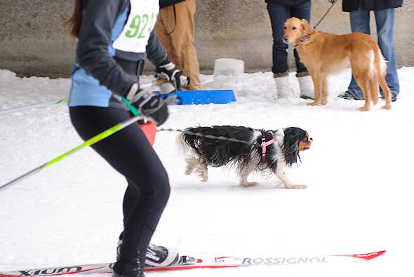 Chuck & Don's Skijoring Loppet