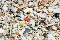 A dense layer of shells on Eighty Mile Beach to the South of Broome.