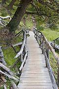 A wooden footbridge leads through a forested area near the Perito Moreno Glacier. The glacier is a popular hiking destination in Los Glaciares National Park, Argentina.