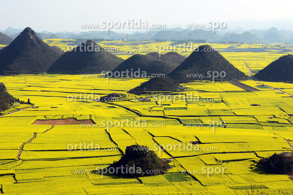 Photo taken on Feb. 25, 2015 shows the scenery of rape fields and hills in Luoping County, southwest China's Yunnan Province. EXPA Pictures &copy; 2015, PhotoCredit: EXPA/ Photoshot/ Mao Hong<br /> <br /> *****ATTENTION - for AUT, SLO, CRO, SRB, BIH, MAZ only*****