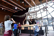 Auction Of A Dinosaur Skeleton On The Eiffel Tower - 04 June 2018