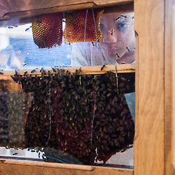 Beekeeping Buzzaar
