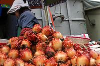 Jagalchi Market, Busan, Korea. 2007
