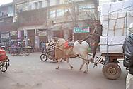 new delhi, india 2017