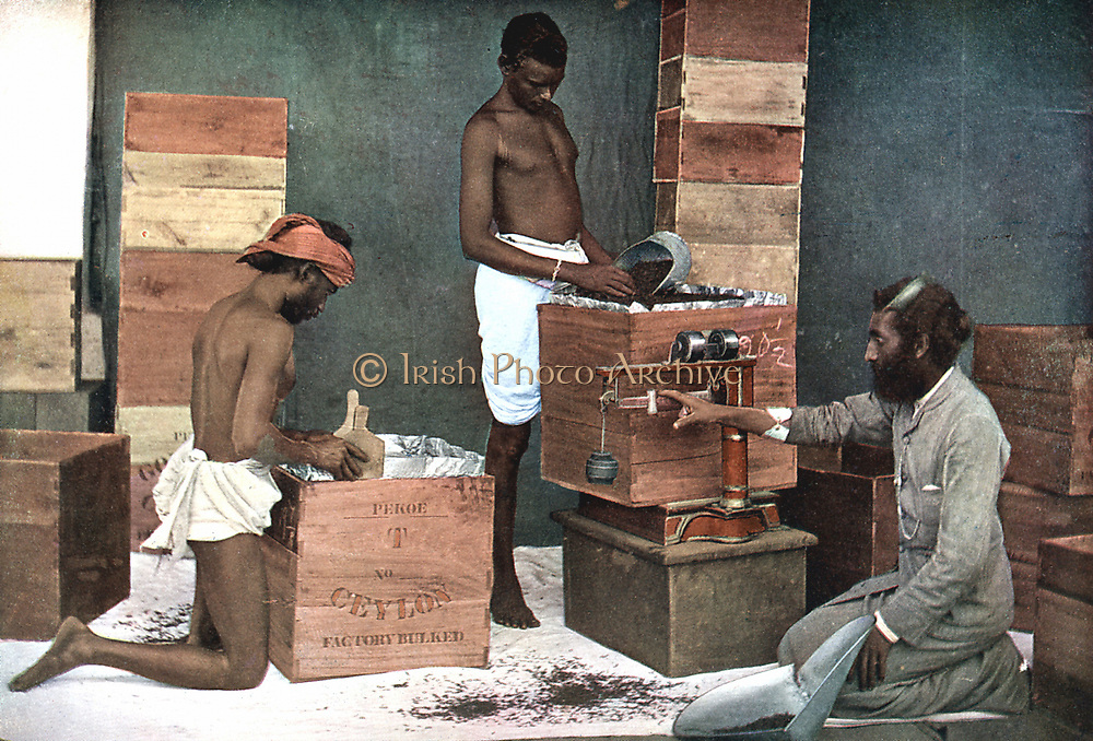 Packing and weighing tea for export on a Ceylon estate.  Colour illustration 1905.