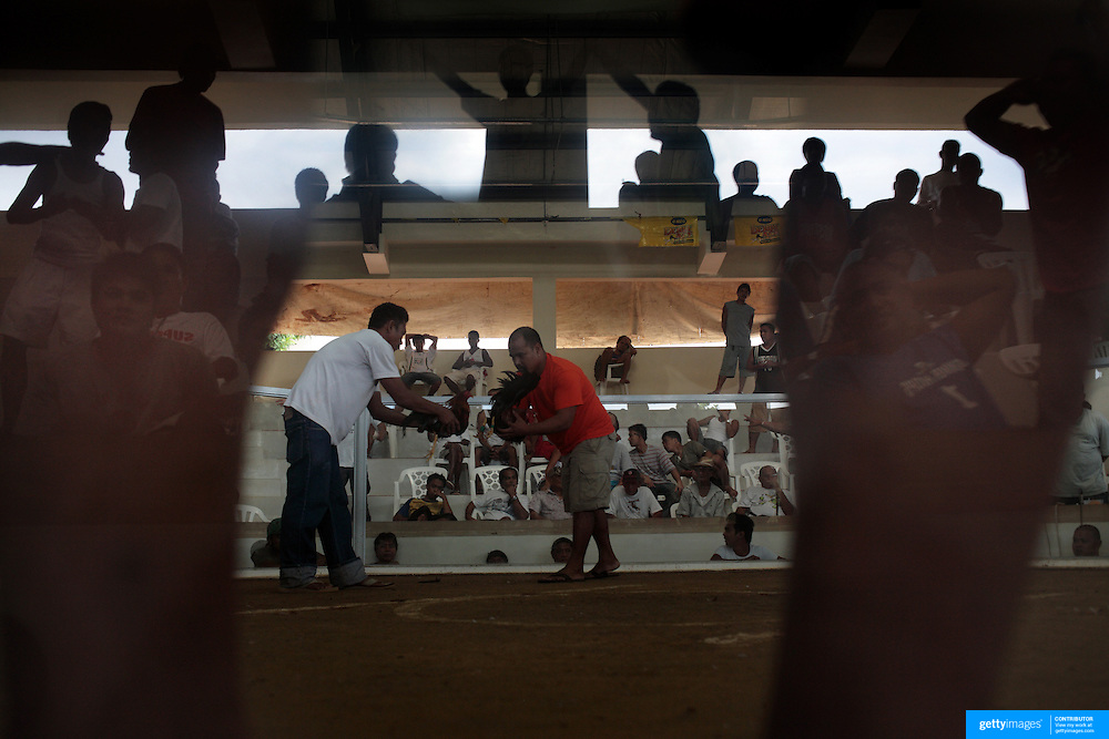 THE PHILIPPINES (Boracay). 2009. Gamblers are reflected in the glass surrounding the cockpit as they make wagers with each other while two birds are prepared for the next fight at the Boracay Cockpit, Boracay Island. Photo Tim Clayton <br /> <br /> Cockfighting, or Sabong as it is know in the Philippines is big business, a multi billion dollar industry, overshadowing Basketball as the number one sport in the country. It is estimated over 5 million Roosters will fight in the smalltime pits and full-blown arenas in a calendar year. TV stations are devoted to the sport where fights can be seen every night of the week while The Philippine economy benefits by more than $1 billion a year from breeding farms employment, selling feed and drugs and of course betting on the fights...As one of the worlds oldest spectator sports dating back 6000 years in Persia (now Iran) and first mentioned in fourth century Greek Texts. It is still practiced in many countries today, particularly in south and Central America and parts of Asia. Cockfighting is now illegal in the USA after Louisiana becoming the final state to outlaw cockfighting in August this year. This has led to an influx of American breeders into the Philippines with these breeders supplying most of the best fighting cocks, with prices for quality blood lines selling from PHP 8000 pesos (US $160) to as high as PHP 120,000 Pesos (US $2400)..