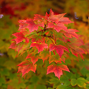 """Peaking Desire""<br />