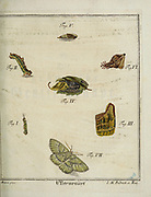 Butterflies and moths 18th century Entomology study from D. Jacob Christian Schaffers Abhandlungen von Insecten (Treatises on insects) published in 1764 by Schäffer, Jacob Christian, 1718-1790 Second addition Printed in Germany in 1797