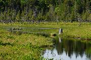 Marsh near Jordan Pond, Acadia National Park, Maine