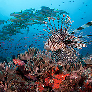 Marine Life | PNG