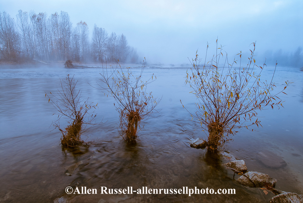 Bitterroot River, winter, fog, near Hamilton, Montana