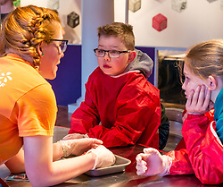 City Arts Centre, Edinburgh, Scotland, United Kingdom, 9 April 2019. Edinburgh Science Festival:  Jamie Carter, age 8 years, and other children has fun learning about blood with a sheep heart at the Blood Bar drop in event with Science Communicator Emma at the Science Festival. <br /> Sally Anderson | EdinburghElitemedia.co.uk