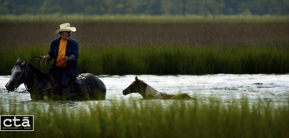 """A salwater cowboy leads a pony separated from the heard to make the swim across the channel from Assateague Island to Chincoteague Island. On the last Wednesday of July, the tradition of swimming the wild Chincoteague ponies takes place, as memorialized in the 1947 book """"Misty of Chincoteague"""" by Marguerite Henry."""