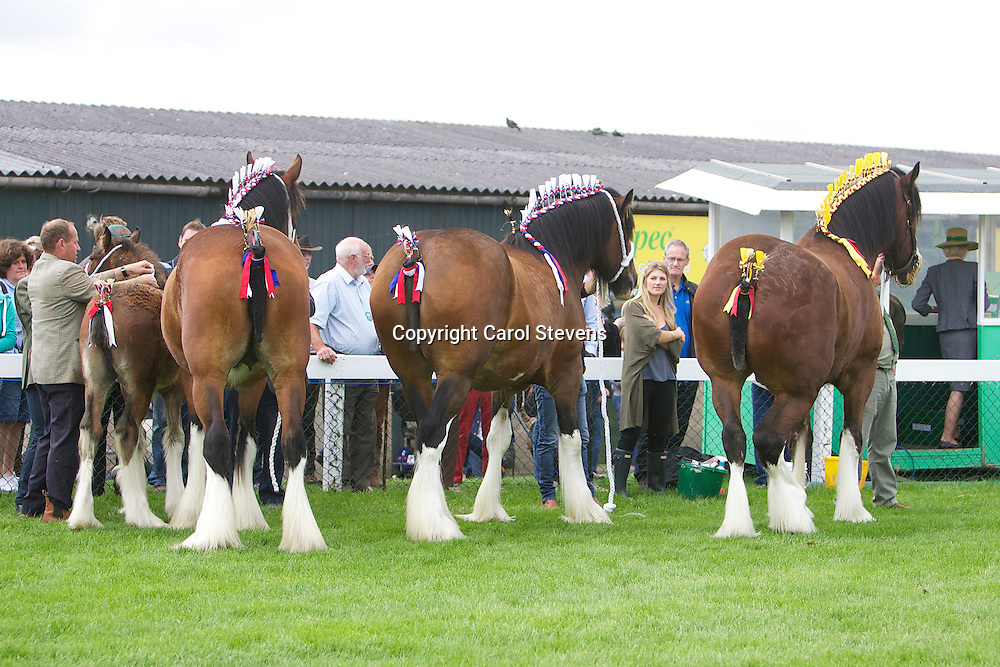 Great Yorkshire Show 2015 Shire Horse Breed Classes<br />