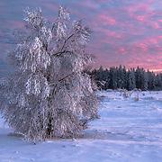 Winter in der belgischen Eifel - Hautes Fagnes