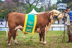 Grandes Campeões Polled Hereford