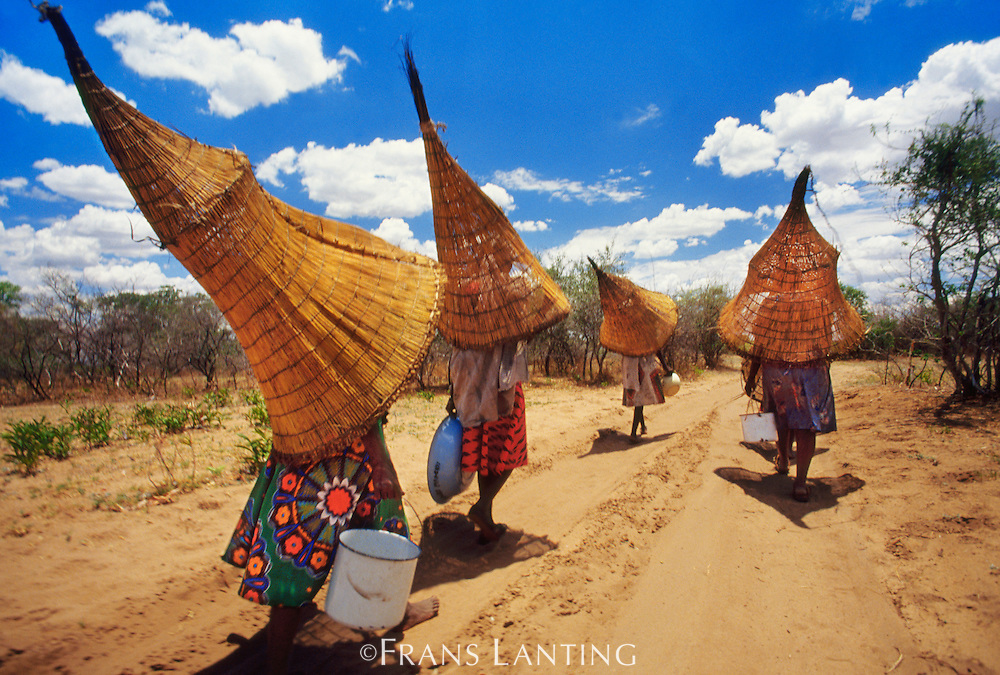Mbukushu women carrying fishing baskets, Okavango Delta, Botswana