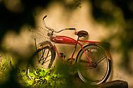 Abandoned bike, Sarasota, Florid