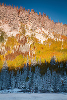 Fall colors of the aspen trees near Silver Lake atop Big Cottonwood canyon in Utah.  A recent snowstorm left a splash of snow to surround the colored trees.