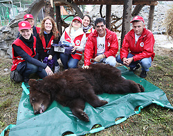 Rescued  - Masha the brown bear. <br /> Masha the bear rescued from a group of mafia who ran bear bating tournaments. The Four Paws team who rescued her from the mafia, Ukraine, Monday, 2nd September 2013. Picture by Roger Allen / i-Images