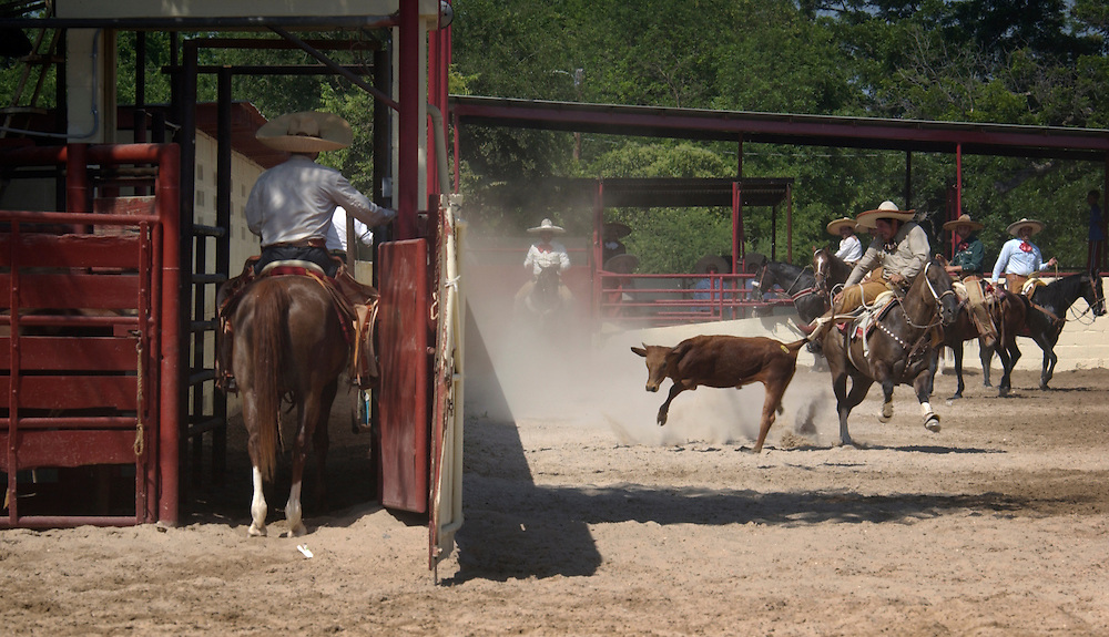 A competitor at a Charreada, a Mexican style Òrodeo,Ó on May 18, 2003, in San Antonio, Texas competes in Colas en Lienzo, (Bull Tailing). The object is to grab the tail of a running bull, wrap it around your leg, and pull it to the ground. This is the old way of catching the bull for treatment. Four hundred years of tradition are behind the competition known as Charreada.   Performed in a lienzo (arena), which is shaped like a keyhole, the charreda is composed of nine suertes (events). For over fifty years the San Antonio Charro Association, has been passing the love of the charreada from generation to generation. A member of the National Federation of Mexico, the Association is the oldest Charro Association in the United States.