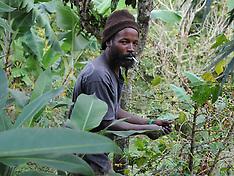 Jamaica Bikes, Mountains, Coffee Plantatations