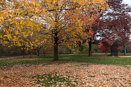 """""""Autumn is a second spring when every leaf is a flower."""" --Albert Camus"""