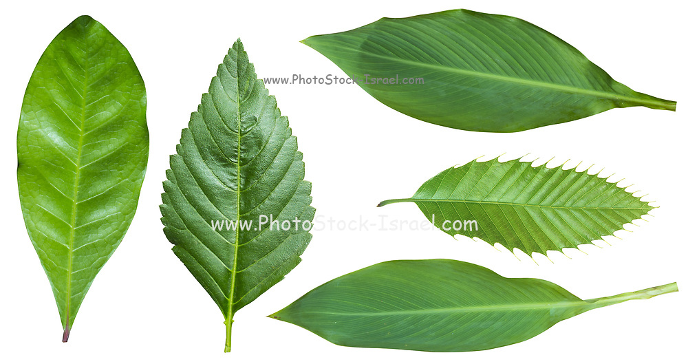 five leafs of houseplants on white background